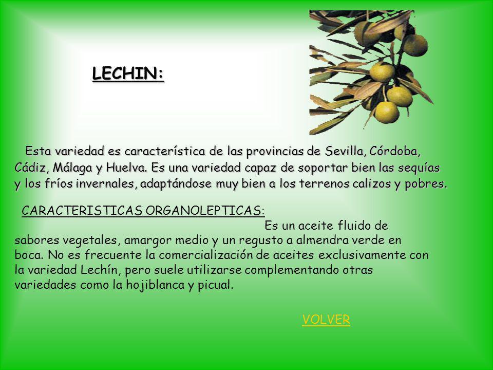 LECHIN: Esta variedad es característica de las provincias de Sevilla, Córdoba,