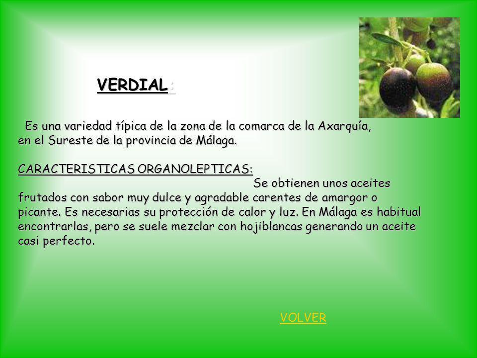 VERDIAL: Es una variedad típica de la zona de la comarca de la Axarquía, en el Sureste de la provincia de Málaga.