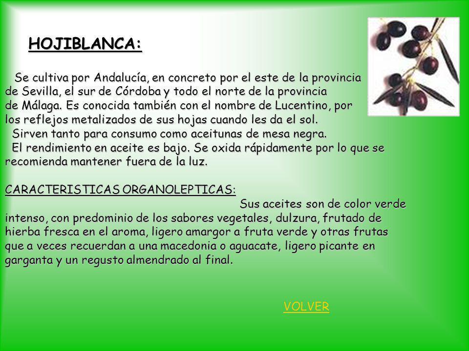 HOJIBLANCA: Se cultiva por Andalucía, en concreto por el este de la provincia. de Sevilla, el sur de Córdoba y todo el norte de la provincia.
