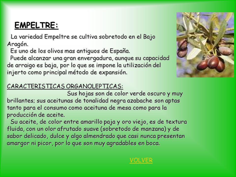 EMPELTRE: La variedad Empeltre se cultiva sobretodo en el Bajo Aragón.