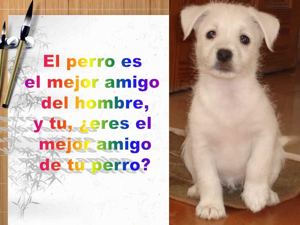 El perro es el mejor amigo del hombre, y tu, ¿eres el mejor amigo de tu perro