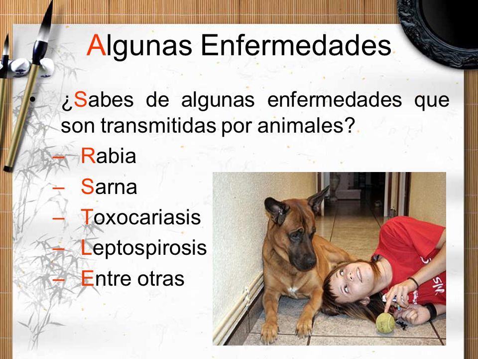 Algunas Enfermedades ¿Sabes de algunas enfermedades que son transmitidas por animales Rabia. Sarna.