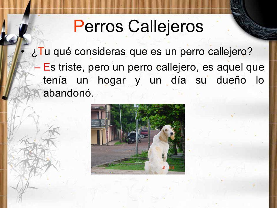 Perros Callejeros ¿Tu qué consideras que es un perro callejero