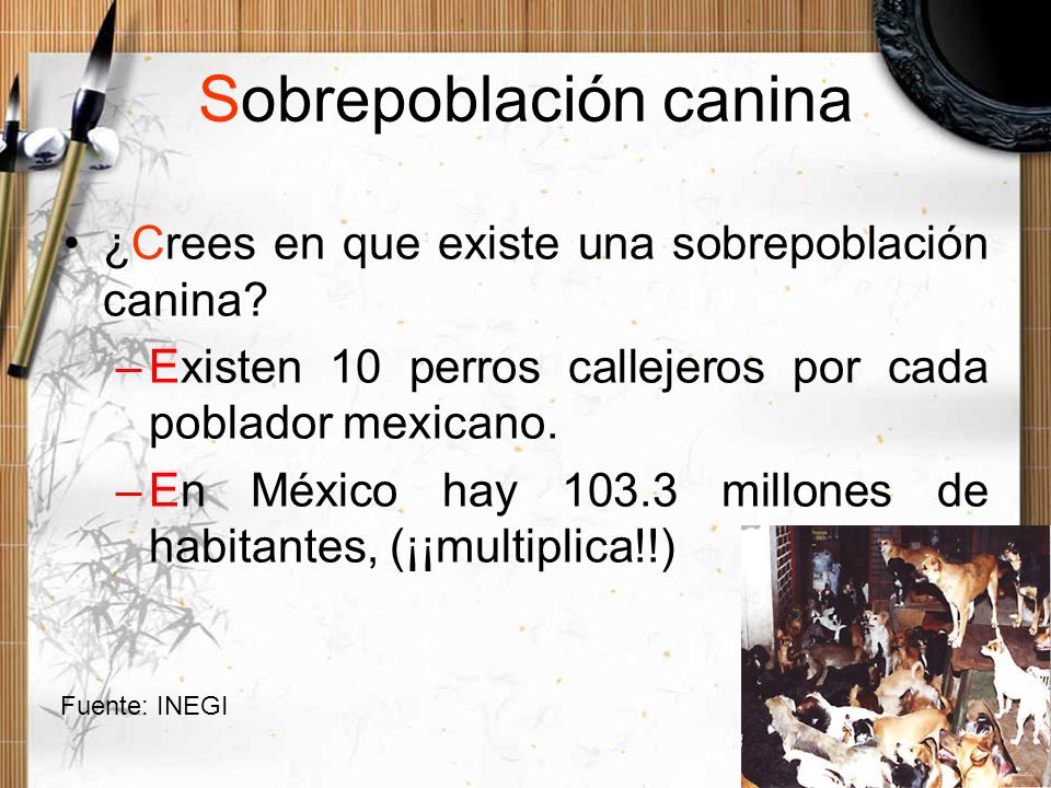 Sobrepoblación canina