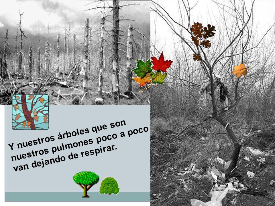 Y nuestros árboles que son nuestros pulmones poco a poco van dejando de respirar.