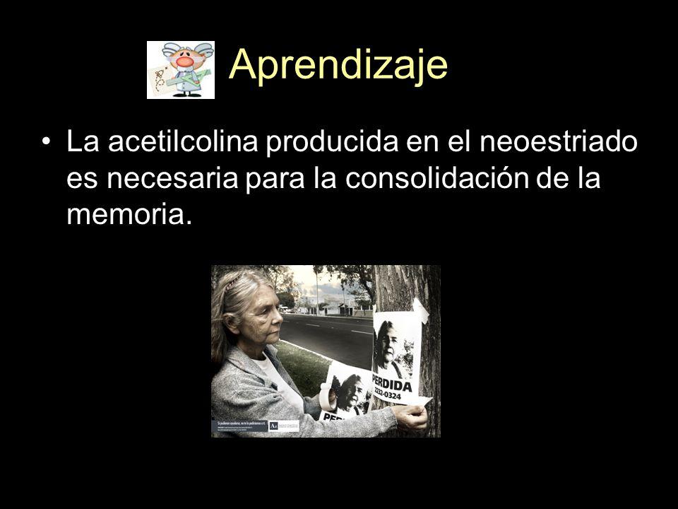 AprendizajeLa acetilcolina producida en el neoestriado es necesaria para la consolidación de la memoria.