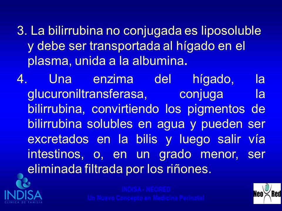 3. La bilirrubina no conjugada es liposoluble y debe ser transportada al hígado en el plasma, unida a la albumina.