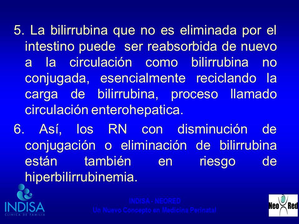 5. La bilirrubina que no es eliminada por el intestino puede ser reabsorbida de nuevo a la circulación como bilirrubina no conjugada, esencialmente reciclando la carga de bilirrubina, proceso llamado circulación enterohepatica.