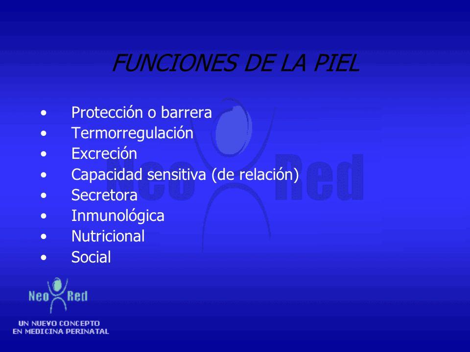 FUNCIONES DE LA PIEL Protección o barrera Termorregulación Excreción
