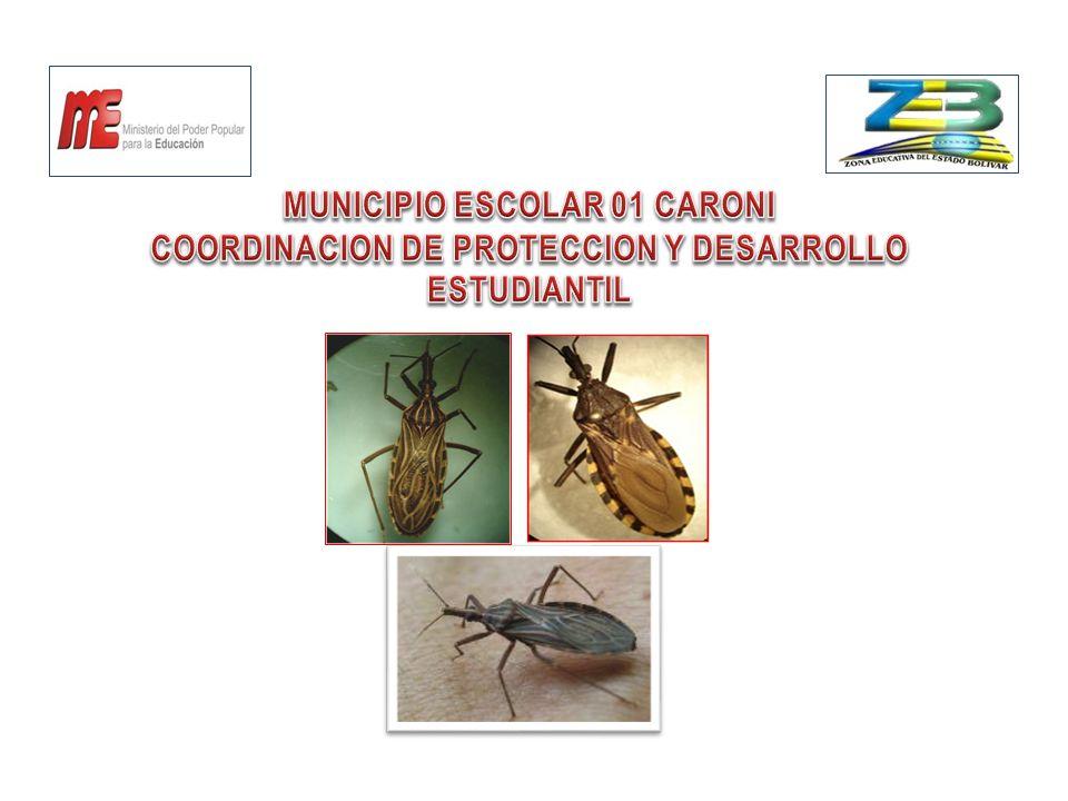 MUNICIPIO ESCOLAR 01 CARONI COORDINACION DE PROTECCION Y DESARROLLO ESTUDIANTIL