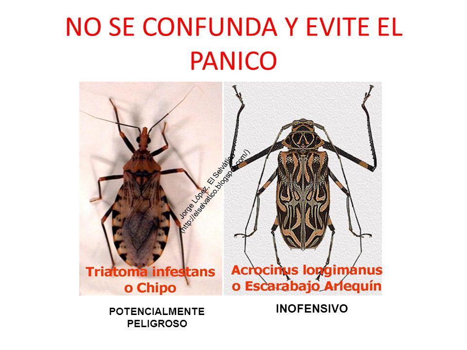 NO SE CONFUNDA Y EVITE EL PANICO