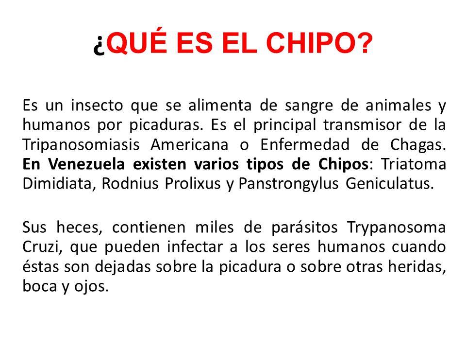 ¿QUÉ ES EL CHIPO