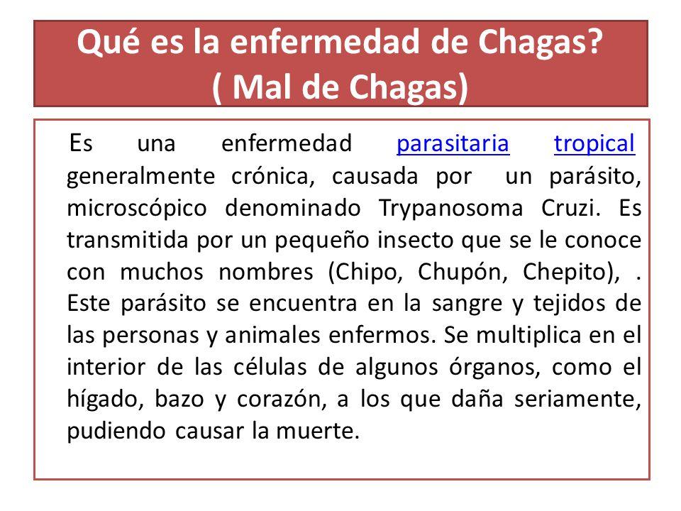 Qué es la enfermedad de Chagas ( Mal de Chagas)