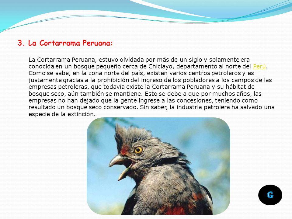 3. La Cortarrama Peruana: