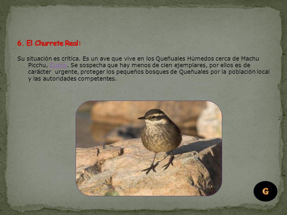 6. El Churrete Real: