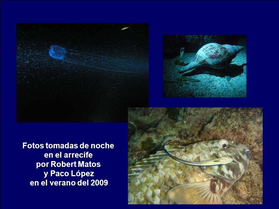 Fotos tomadas de noche en el arrecife por Robert Matos y Paco López en el verano del 2009