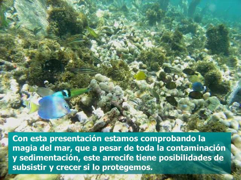 Con esta presentación estamos comprobando la magia del mar, que a pesar de toda la contaminación y sedimentación, este arrecife tiene posibilidades de subsistir y crecer si lo protegemos.