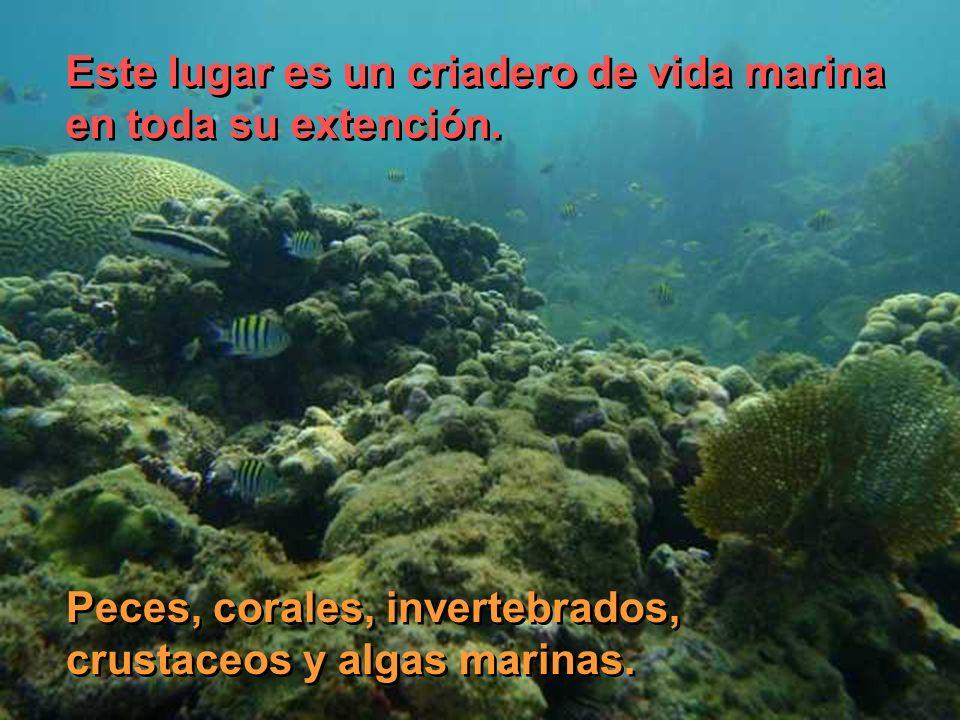 Este lugar es un criadero de vida marina