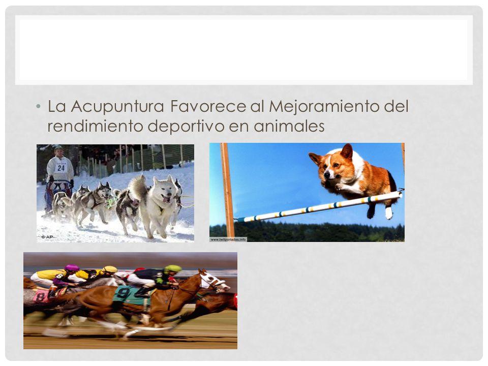 La Acupuntura Favorece al Mejoramiento del rendimiento deportivo en animales