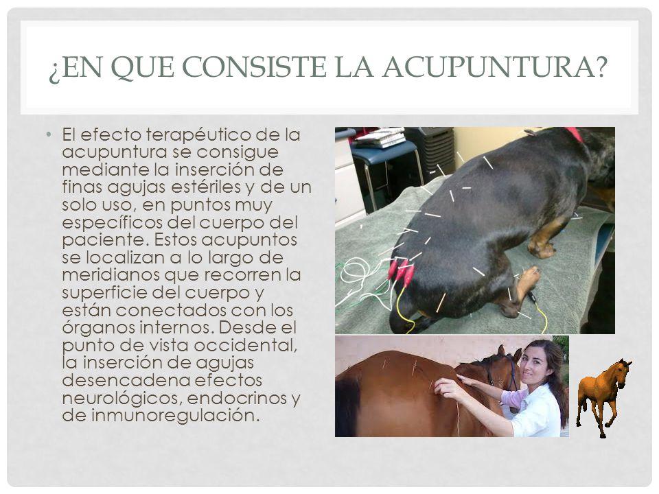 ¿en que consiste la acupuntura