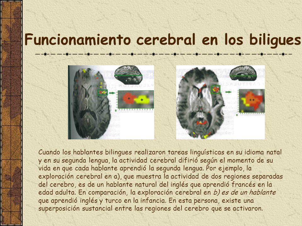 Funcionamiento cerebral en los biligues