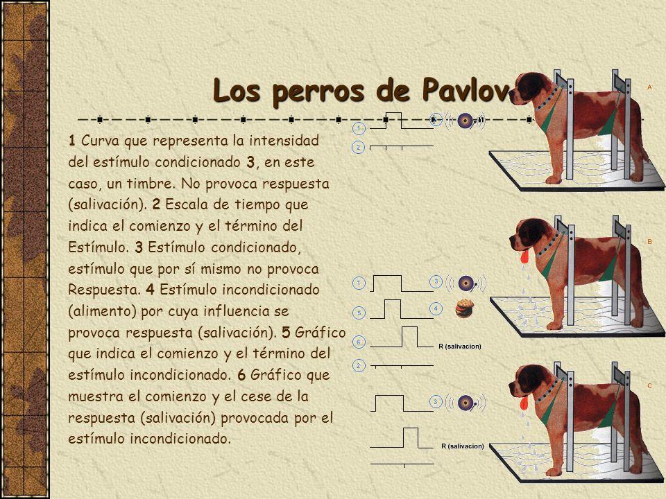 Los perros de Pavlov 1 Curva que representa la intensidad