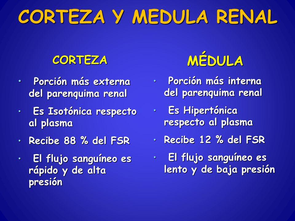 CORTEZA Y MEDULA RENAL MÉDULA CORTEZA
