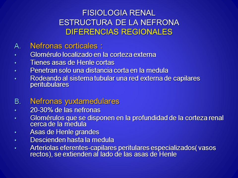 FISIOLOGIA RENAL ESTRUCTURA DE LA NEFRONA DIFERENCIAS REGIONALES