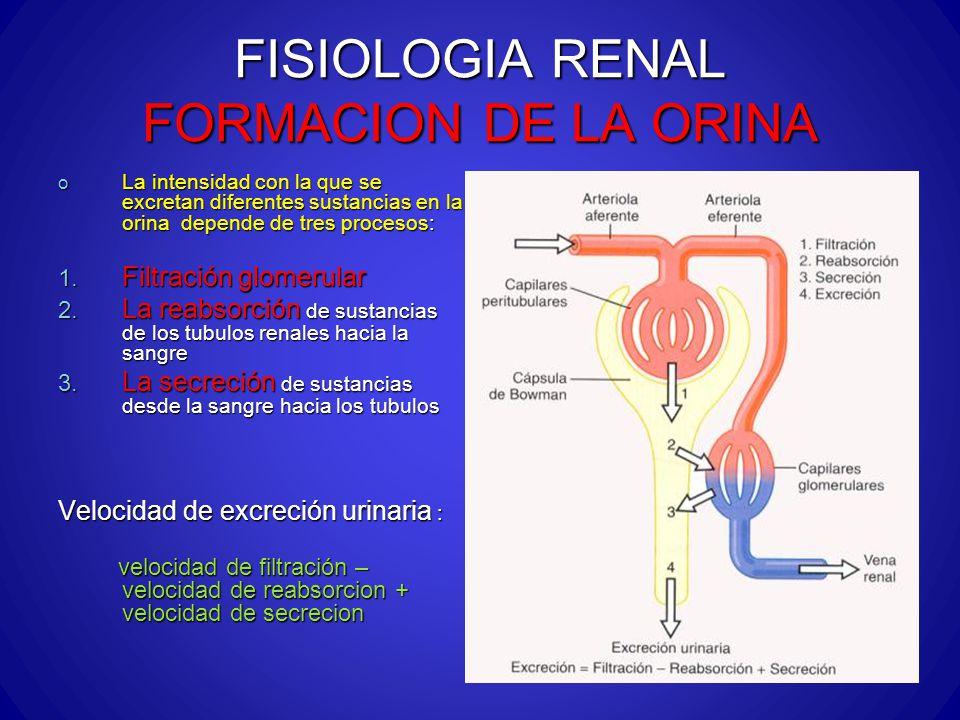 FISIOLOGIA RENAL FORMACION DE LA ORINA