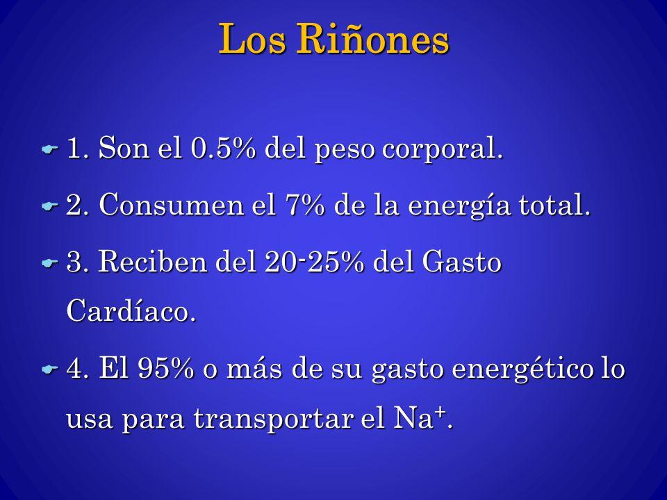 Los Riñones 1. Son el 0.5% del peso corporal.