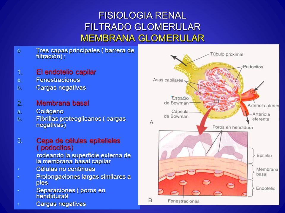 FISIOLOGIA RENAL FILTRADO GLOMERULAR MEMBRANA GLOMERULAR