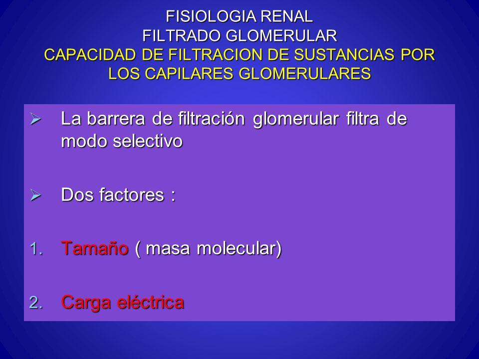 La barrera de filtración glomerular filtra de modo selectivo