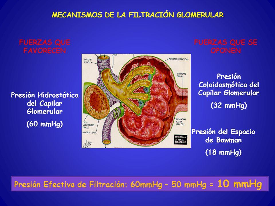 Presión Efectiva de Filtración: 60mmHg – 50 mmHg = 10 mmHg
