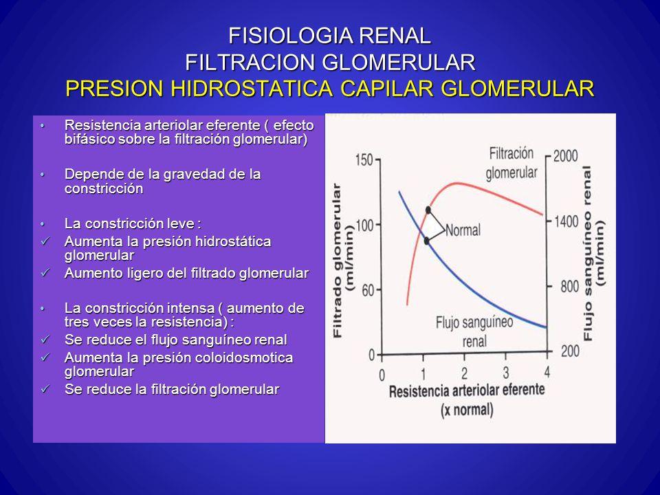 FISIOLOGIA RENAL FILTRACION GLOMERULAR PRESION HIDROSTATICA CAPILAR GLOMERULAR