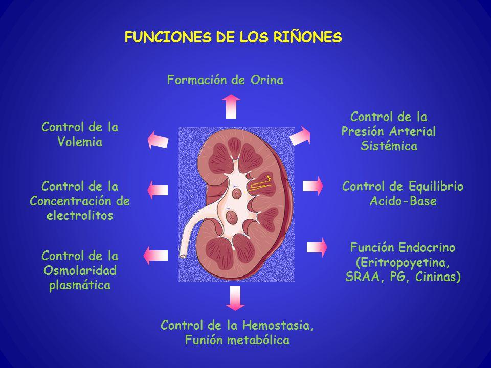 FUNCIONES DE LOS RIÑONES