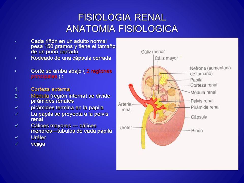 FISIOLOGIA RENAL ANATOMIA FISIOLOGICA