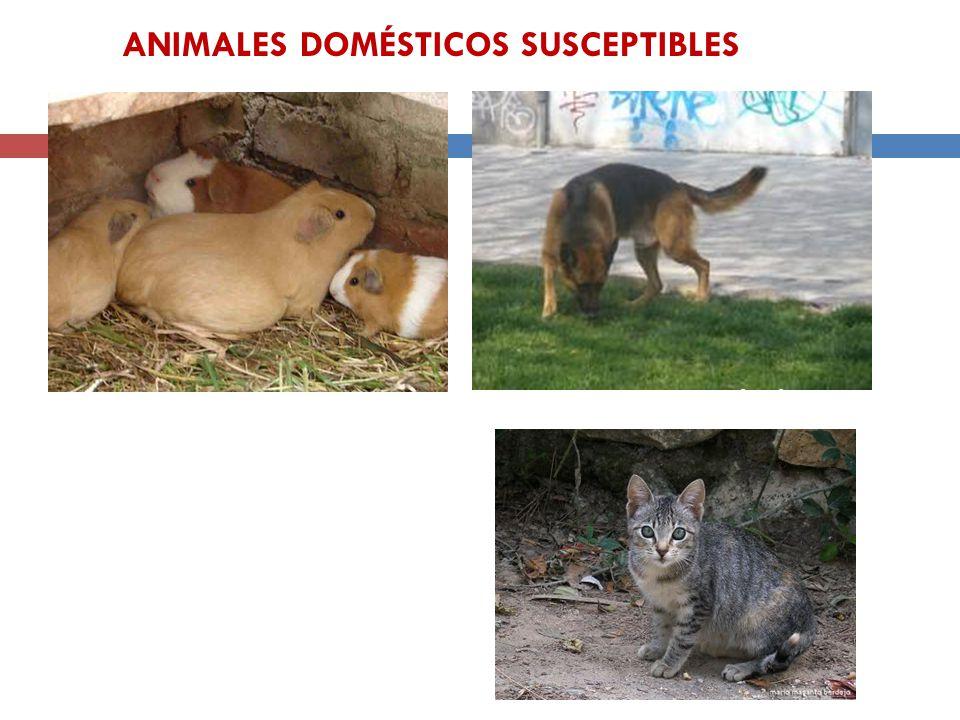 ANIMALES DOMÉSTICOS SUSCEPTIBLES