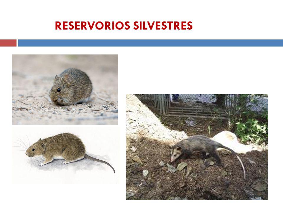 RESERVORIOS SILVESTRES