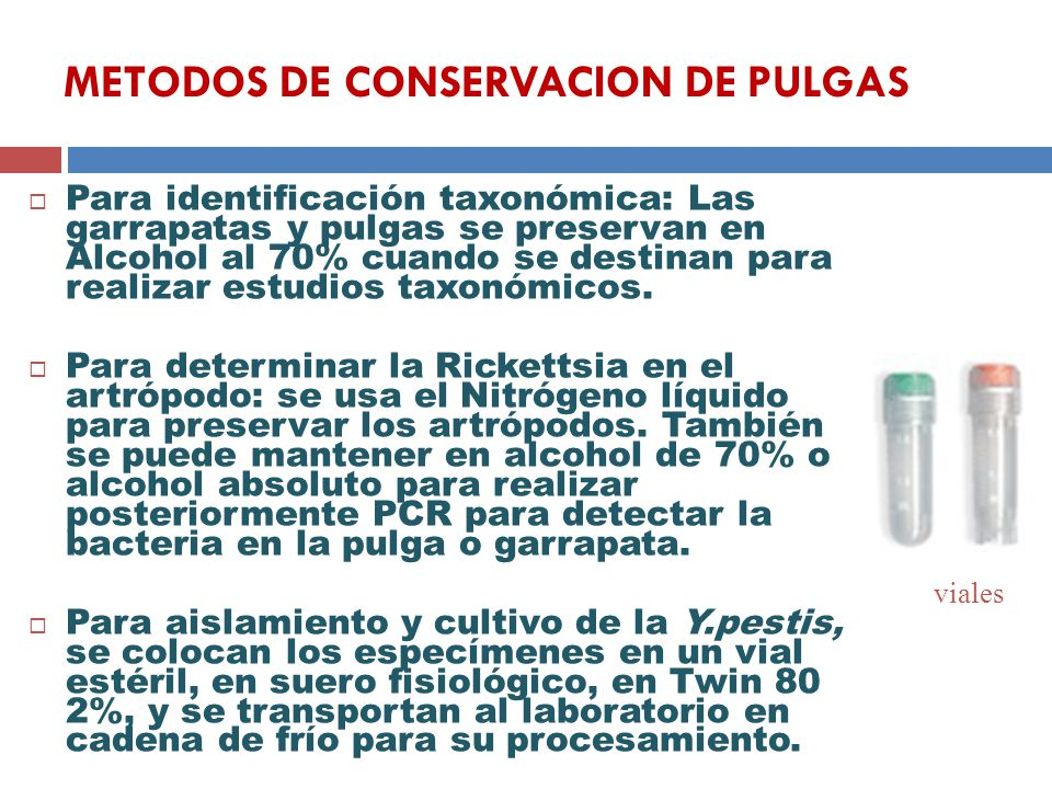 METODOS DE CONSERVACION DE PULGAS