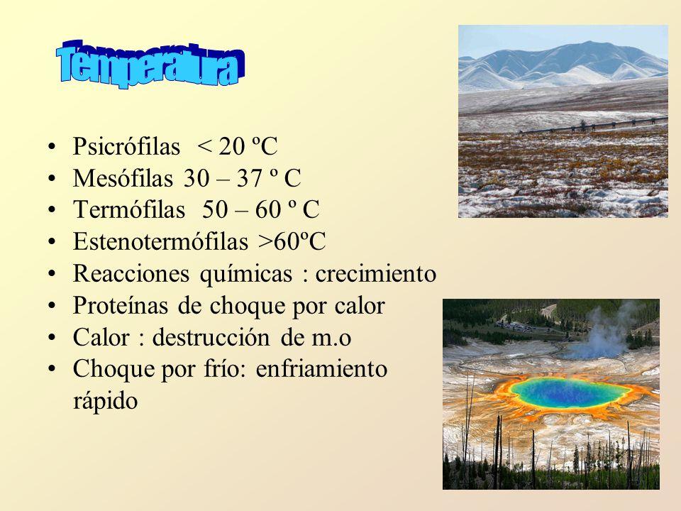 Temperatura Psicrófilas < 20 ºC Mesófilas 30 – 37 º C