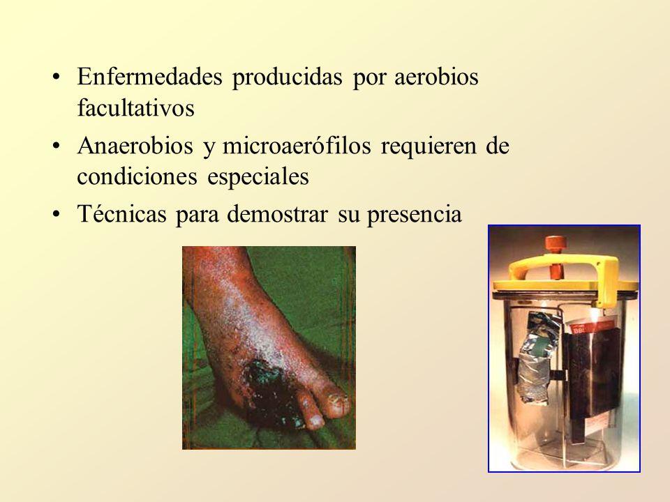 Enfermedades producidas por aerobios facultativos