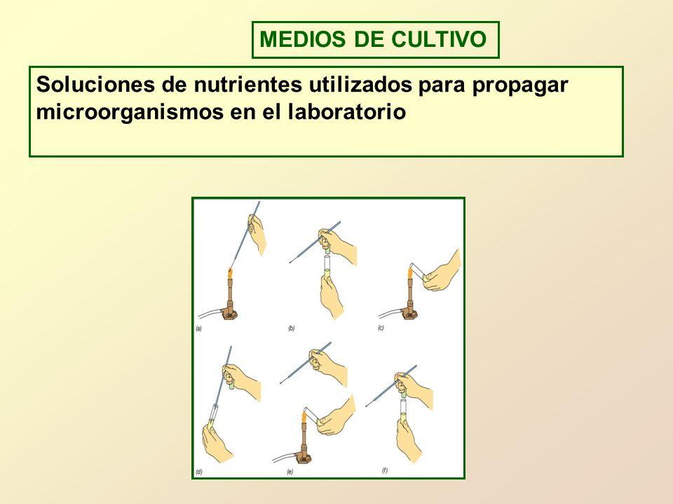 MEDIOS DE CULTIVO Soluciones de nutrientes utilizados para propagar microorganismos en el laboratorio.