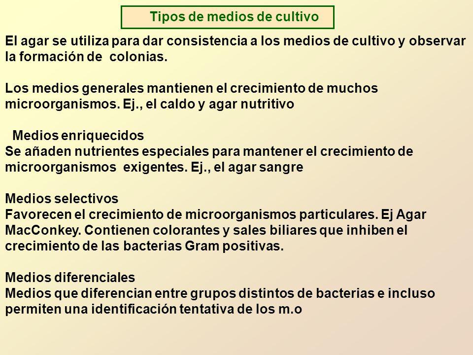 El agar se utiliza para dar consistencia a los medios de cultivo y observar