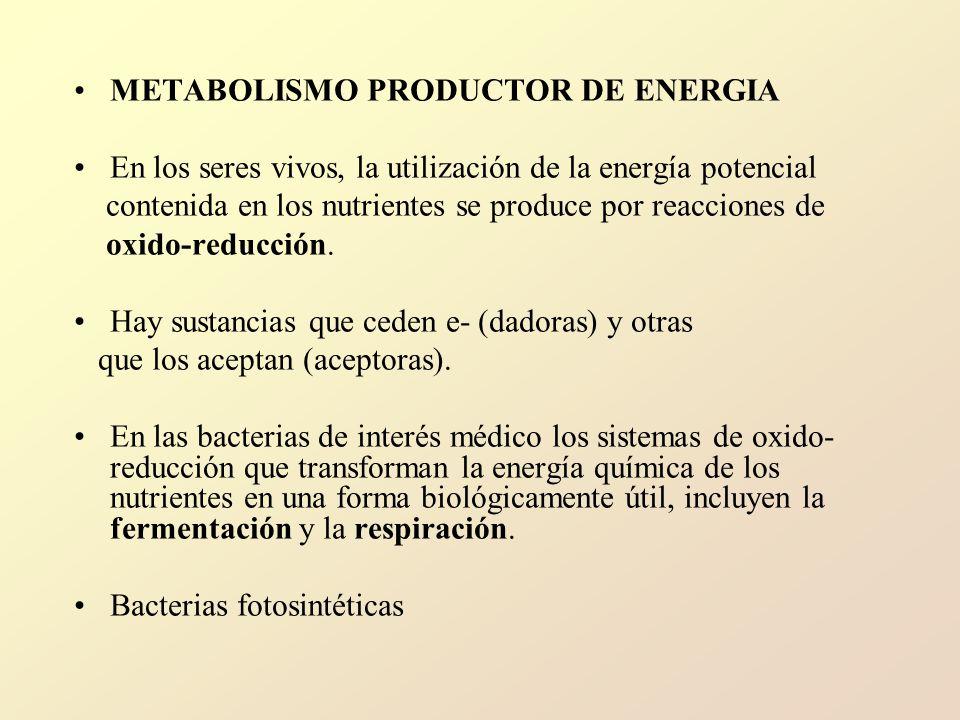 METABOLISMO PRODUCTOR DE ENERGIA