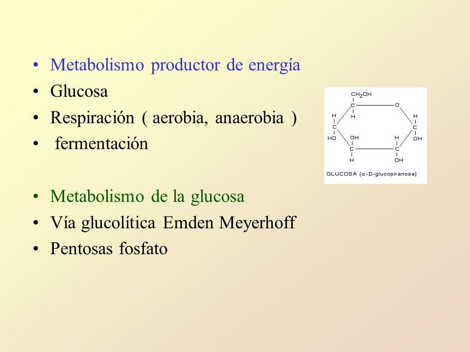 Metabolismo productor de energía
