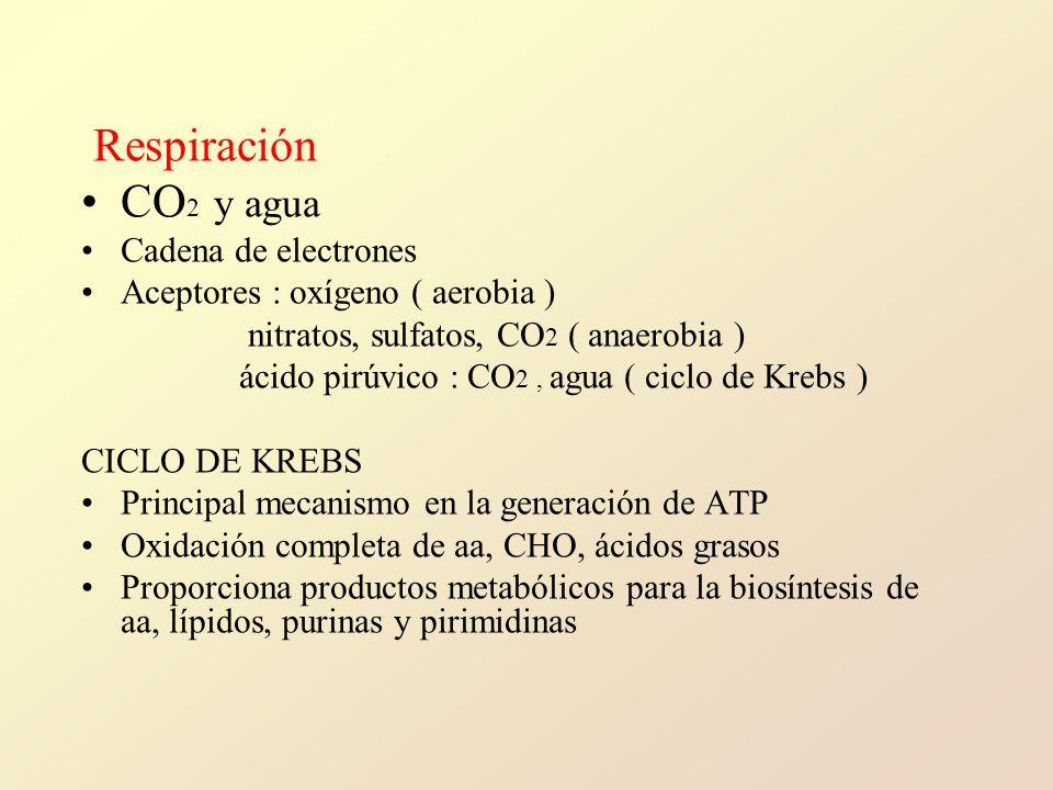 Respiración CO2 y agua Cadena de electrones