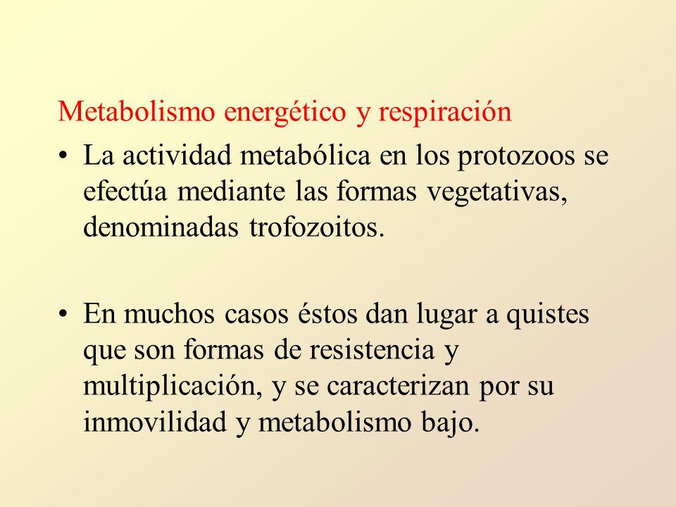 Metabolismo energético y respiración