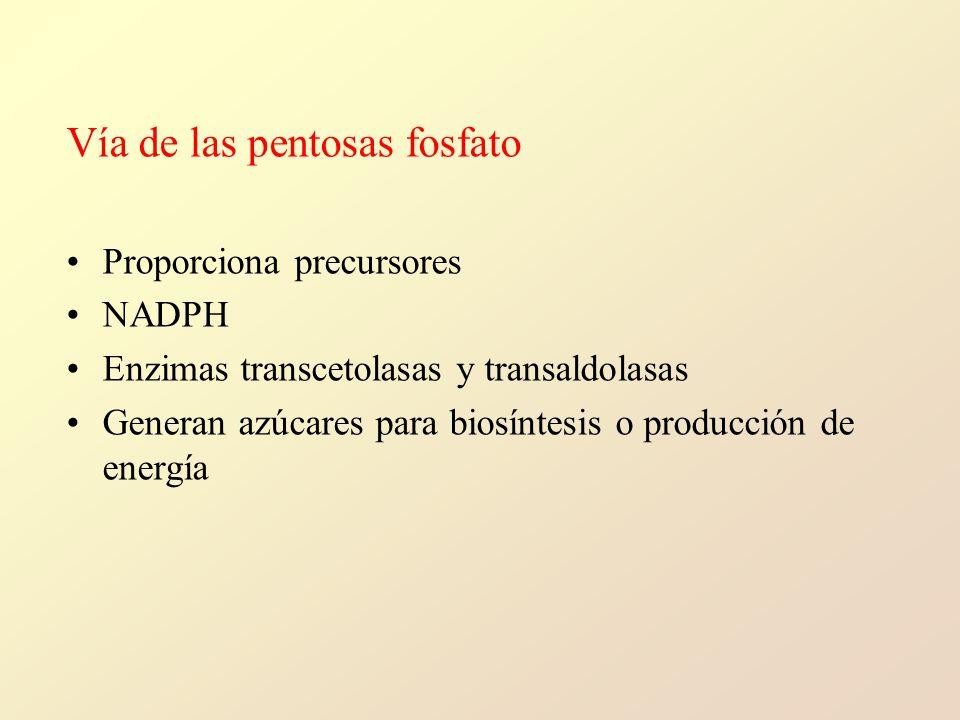 Vía de las pentosas fosfato