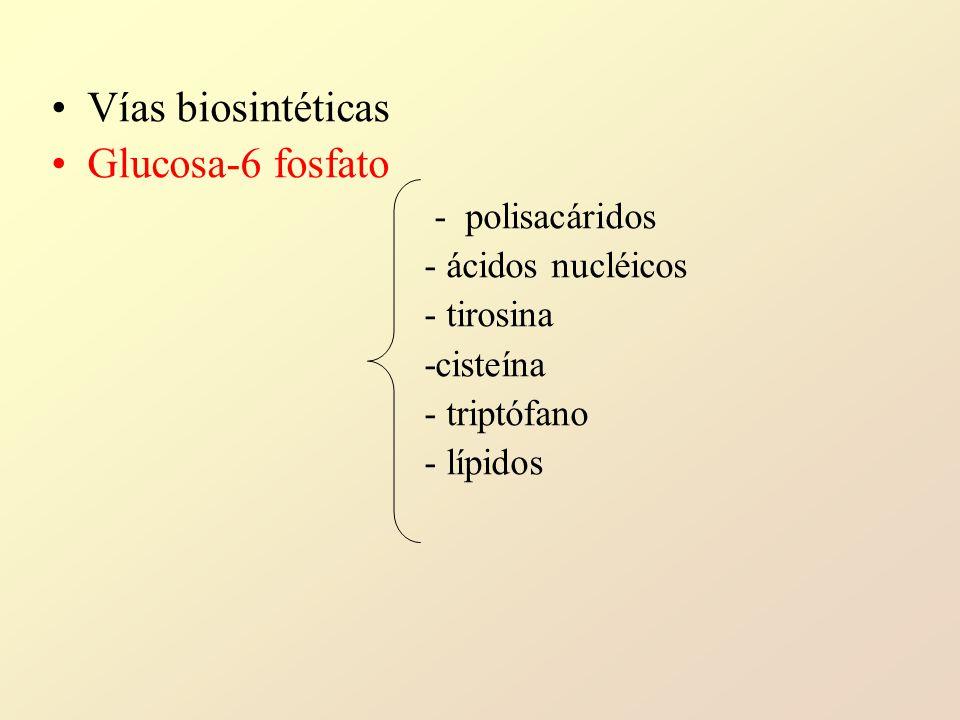 Vías biosintéticas Glucosa-6 fosfato - polisacáridos