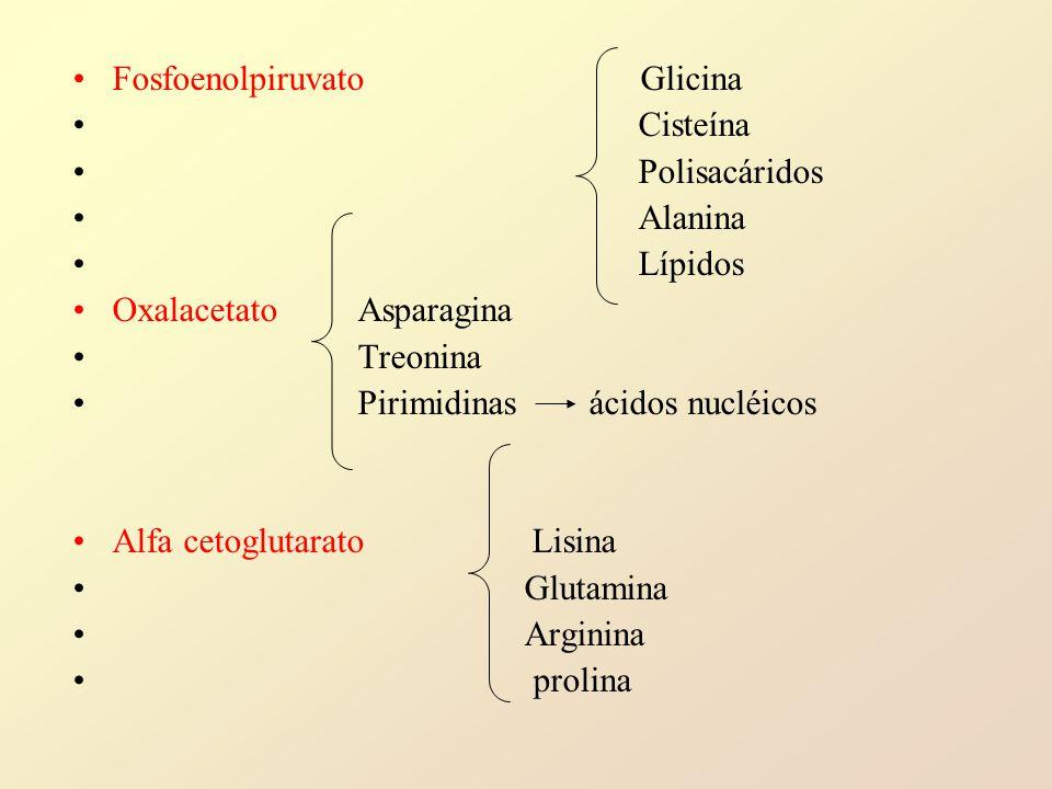 Fosfoenolpiruvato Glicina